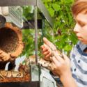 Chlapec vyberá hada z terária