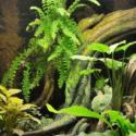 Terárium pre hada