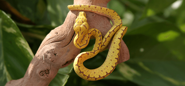 Mláďa hada na konári stromu